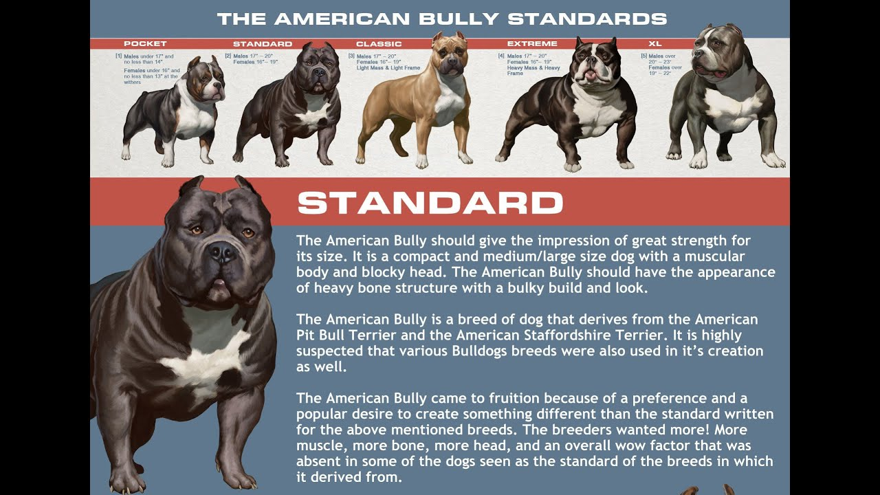 Bull Breed / Health / Care