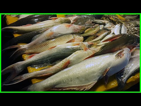 Freshwater Alive Fish Shop In Biggest Fish Market - Live Fish Market