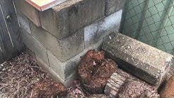 Termites Found during a Building and pest inspection