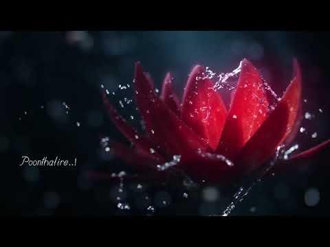 Pookal Pookum Tharunam Aaruyire | Tamil Lyrical Video Song | Dil sere |💞💞💞