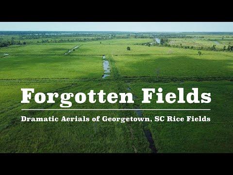 Forgotten Fields - Dramatic 4k Rice Fields of Georgetown South Carolina