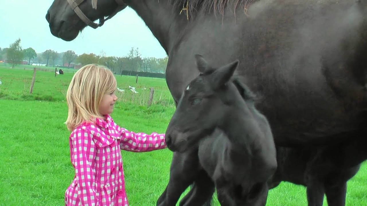 Very Cute Baby Horses With Their Mother Youtube