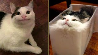 Funny Animal Videos that Make Me Laugh Uncontrollably  (CUTE)