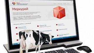 П/к о первых итогах работы ветеринарной сертификации по системе «Меркурий»