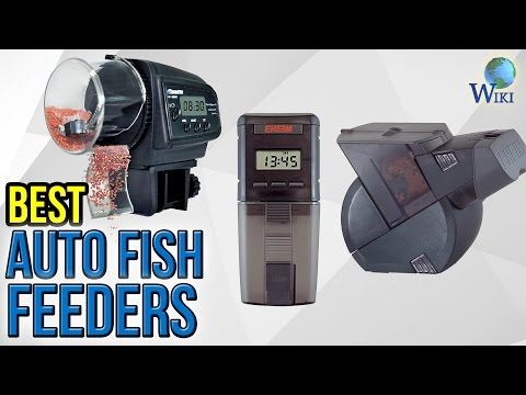 5 Best Auto Fish Feeders 2017