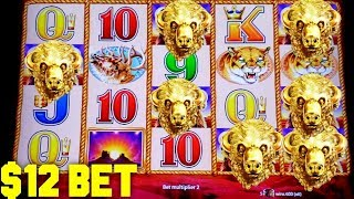 BUFFALO GOLD SLOT MACHINE • $12 BET HIGH LIMIT • NICE RUN! • COIN SHOW