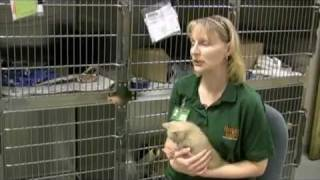 The Emotional Costs of Animal Euthanasia.mp4