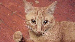 Как правильно кормить кота..??? опять разборки