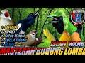 Kompilasi Masteran Burung Lomba Cocok Untuk Masteran Murai Batu Kacer Cucak Hijau Dll  Mp3 - Mp4 Download