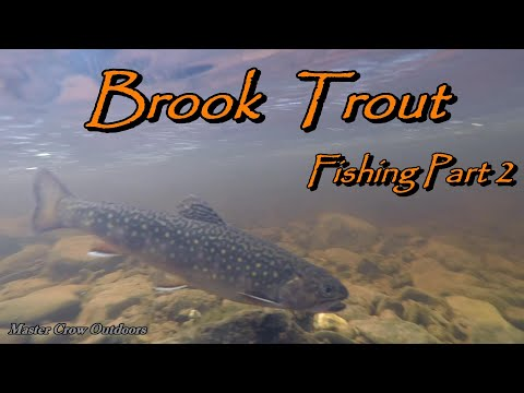 Speckled Trout Fishing In A Small Brook New Brunswick Canada 2020