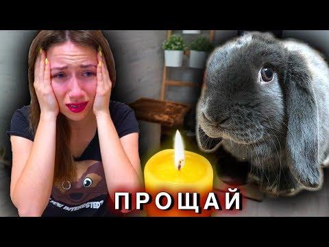 УМЕР КРОЛИК ЛИЗУН Последний День Смерть питомца | Elli Di Pets