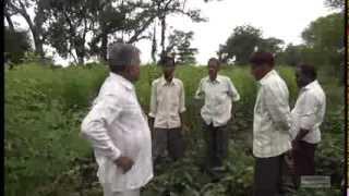 (Hindi)Subhash Sharma Yavatmal 2014-15 farm overview by OFAI