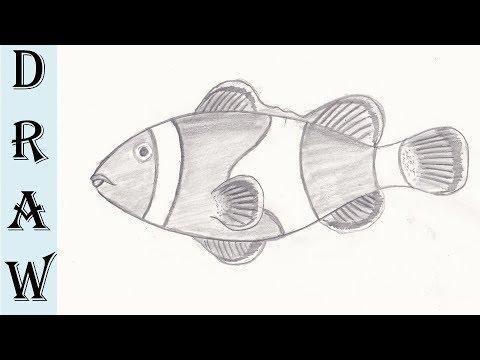 Clown Fish Pencil Drawing