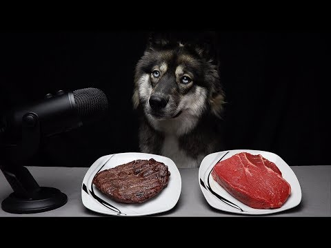ASMR Dog Chooses Raw vs Cooked Meat!