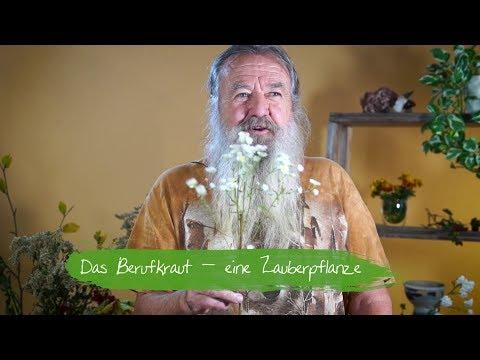 Berufkraut - Eine Zauberpflanze