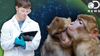 Why Are Scientists Masturbating Animals?