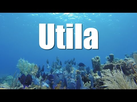 Utila, diving paradise in Honduras