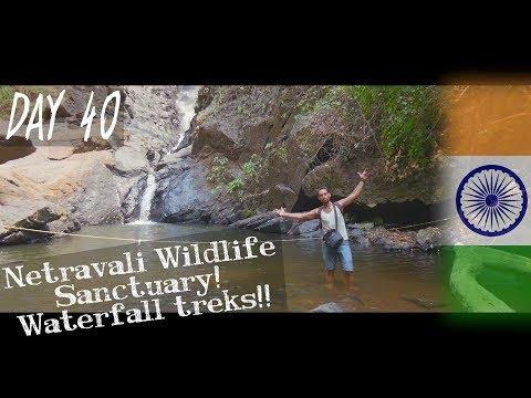 Day 40   Netravali Wildlife Sanctuary and waterfall trek explore!   GOA - INDIA   Solo Travel Vlog
