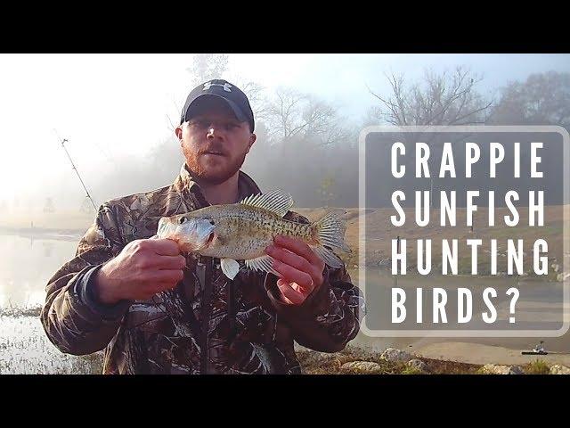 Crappie, Sunfish, Hunting Birds?