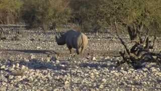 Etosha National Park, Namibia, with Renedian Adventures