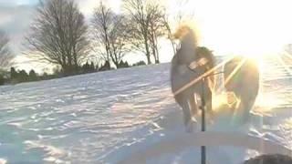 Malamutes Dog Sledding With Children