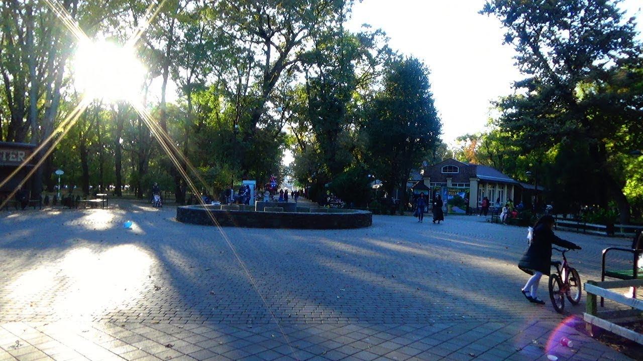 Дуб черешчатый дерево высотой до 40 м, с широкой, раскидистой кроной, стволом до 7 м в диаметре, темно-коричневой корой. Листья.
