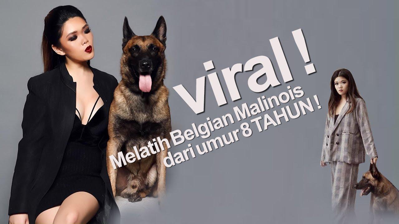 Pelatih Anjing Termuda Tercantik Sudah Menaklukan 7 Ekor Belgian Malinois Youtube