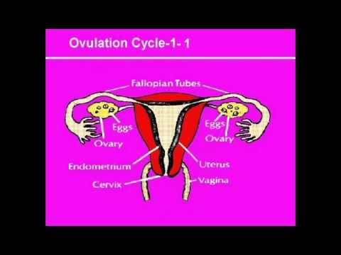 contraception-the-basics,-program-#1