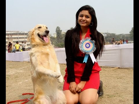 Dog show in india | Marvellous Dogs