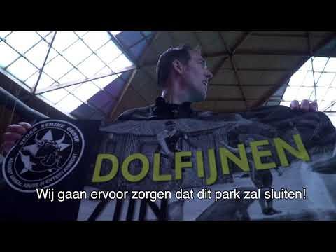 Peter Janssen verzet zich tegen dolfijnenshows