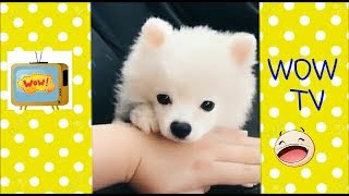 Super cute animals | Funny animals | Funny clips