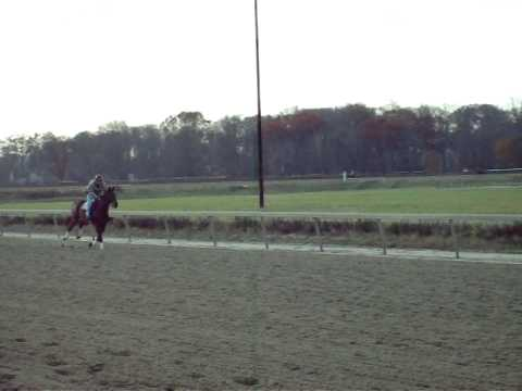 Cash galloping at Bowie Race Track 11-24-09