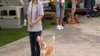 Dog Obedience Novice Lilian & Tyrus