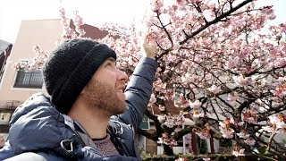 Winter CHERRY BLOSSOMS in JAPAN + French Food & Craft Beer | Atami, Japan