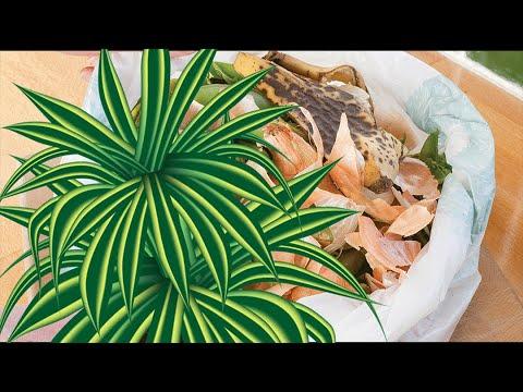Домашние удобрения – польза или вред для растений? ЗА и ПРОТИВ натуральных удобрений.