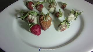 Time Lapse Chronicles: Moldy Strawberries in 4K (Afidus Camera)