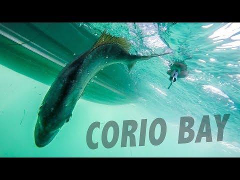 The Fish Of Corio Bay