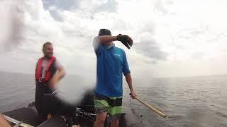 pêche au requin en bretagne