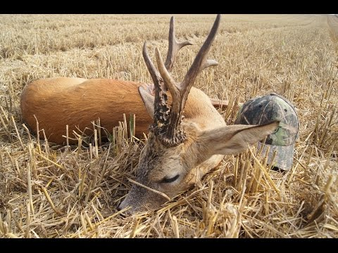Roe Buck Hunting In Poland With Ultimate Hunting