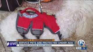 Florida law designed to stop phony service dogs - all bark no bite