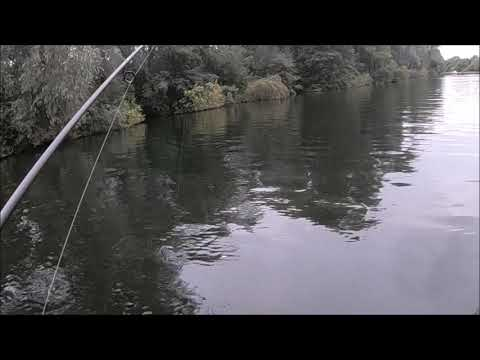 Perch Fishing On The River Bure, Wroxham