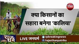 क्या किसानों का सहारा बनेगा 'कालिया'? राजधर्म डॉ मीना शर्मा के साथ - Rajasthan Patrika