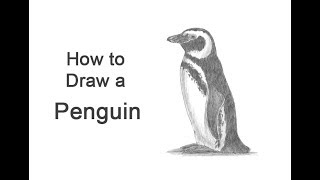 How to Draw a Penguin (Magellanic)