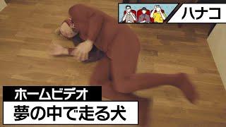 ハナコ コント「ホームビデオ:夢の中で走る犬」