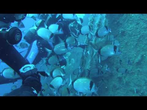 Zenobia Wreck Dive 04-07-2015