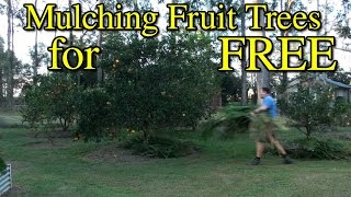 Mulching Fruit Trees for FREE VLog #4