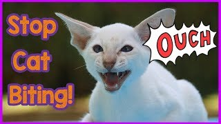 How to Stop Your Cat from Biting You! How to Understand and Stop Cat Aggression and Biting!