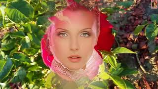 Очень трогательная песня!!! Алые Розы, зачем вы такие красивые...