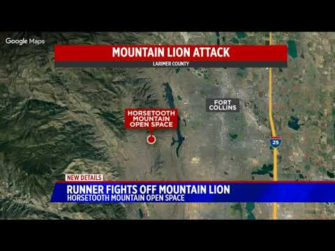 Runner kills mountain lion after attack in Larimer County