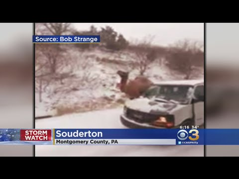 Andi and Kenny  - Camel Stranded On Highway During Area Snowstorm